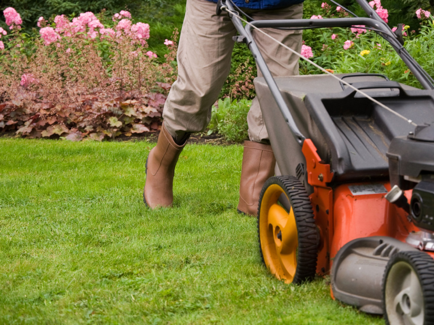 You deserve to have a brilliant lawn